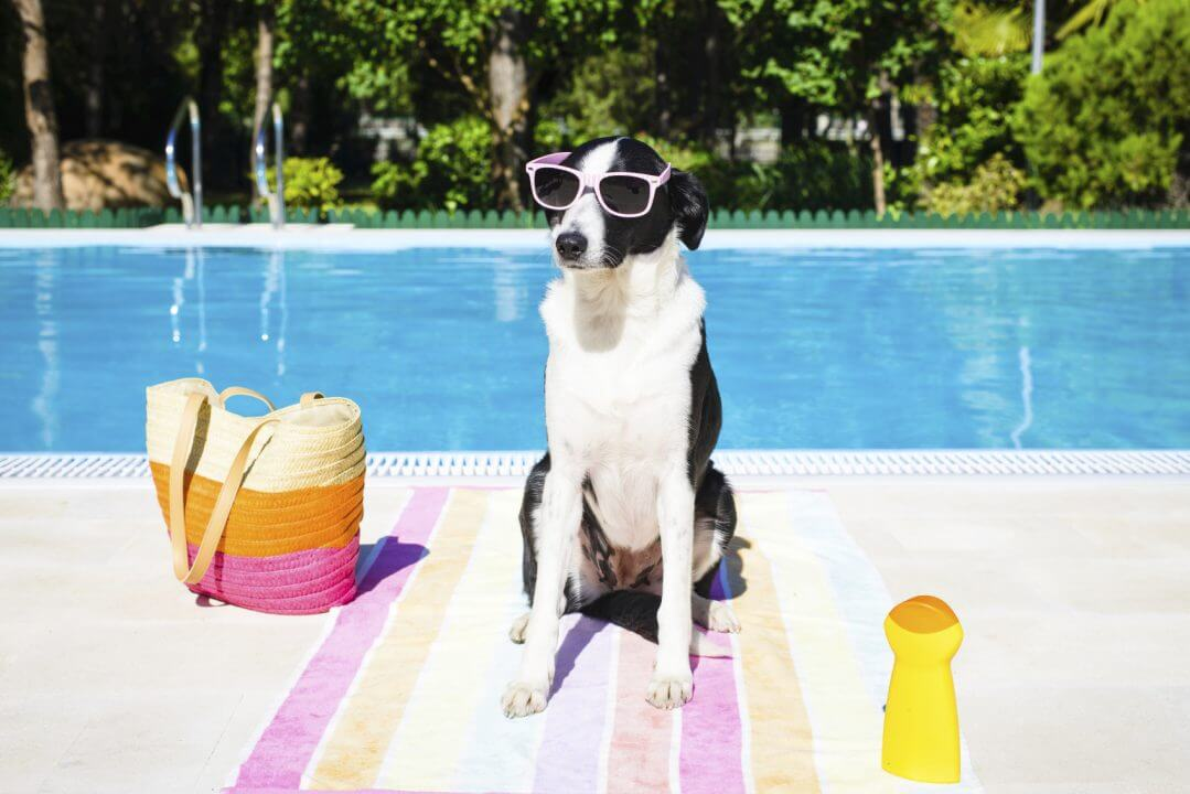 How to Manage Dogs in Pools